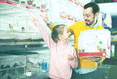 Father and daughter choosing pretty bird. Portrait cheerful father and daughter choosing pretty bird for keeping in pet shop Royalty Free Stock Photo