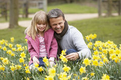 Father And Daughter In Daffodils Royalty Free Stock Image
