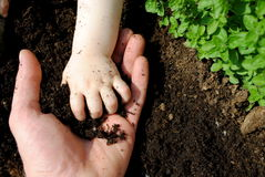 Father and daughter hands play with soil. In the garden Stock Photos