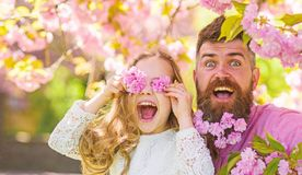 Father and daughter on happy face play with flowers as glasses, sakura background. Child and man with tender pink. Father and daughter on happy face play with royalty free stock image
