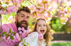 Father and daughter on happy faces play with flowers and hugs, sakura background. Girl with dad near sakura flowers on. Spring day. Child and men with tender royalty free stock images