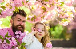 Father and daughter on happy faces play with flowers, sakura background. Girl with dad near sakura flowers on spring day. Child and men with tender pink royalty free stock photography