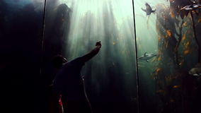 Father and daughter looking at fish tank and taking pictures stock footage