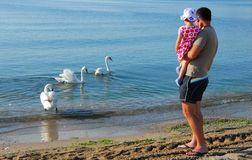 Father and daughter looking at swans  Royalty Free Stock Photos