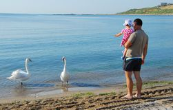 Father and daughter looking at swans Royalty Free Stock Images