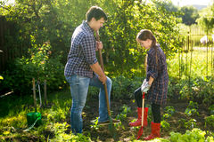Father and daughter spudding garden bed with shovels Royalty Free Stock Image