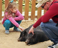 Father and daughter stoke pigs in the contact zoo Stock Image