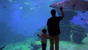 Father and enthusiastic child holding hand and enjoy undersea life at aquarium. UHD 4K stock video footage