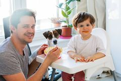 Father feeding a toddler boy with a spoon and dog looking on it royalty free stock photography
