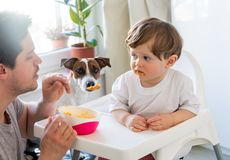 Father feeding a toddler boy with a spoon and dog looking on it stock image