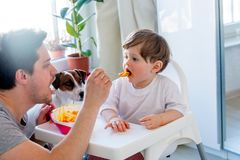 Father feeding a toddler boy with a spoon and dog looking on it royalty free stock photos