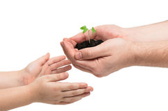 Father gives a little sprout to the baby, ecology concept. Tiny sprout of morning glory in man's hands. The man gives it to his baby. Earth day royalty free stock images