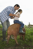 Father Helping Daughter To Ride Pig Stock Image