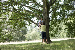 A father helping his son down from a tree Royalty Free Stock Photography