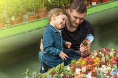 Father and her baby boy in a plant shop looking at cacti. Gardening In Greenhouse. Botanical garden, flower farming stock photo