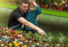 Father and her baby boy in a plant shop looking at cacti. Gardening In Greenhouse. Botanical garden, flower farming royalty free stock image