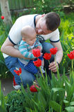 A father with his child in arms admire tulips Stock Image