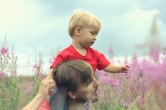 Father and his little son exploring blooming fireweed field. Cut. E toddler boy sits on his father`s shoulders and looks at the blooming willow. Family look stock image
