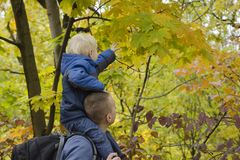 Father with his son on his shoulders walking in the autumn fores. T. e view stock image