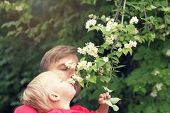 Father and his toddler son sniffing Philadelphus flowers on the branch. It smell like Jasmine. Spring season concept royalty free stock photos