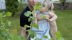Daddy with little daughter explore nature in their garden stock footage