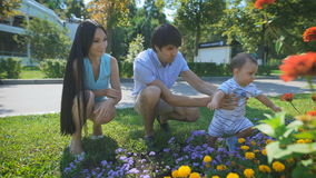 Father holding the baby while he is touching to the flower. Father holding the baby while he is touching to the flower in park. Mother looks at her son. Family stock video footage