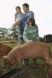 Father With Kids Watching Pigs Feed In Sty Royalty Free Stock Image