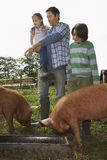 Father With Kids Watching Pigs Feed In Sty Stock Photography