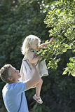 Father lifting daughter (2-3) above head, girl picking apple from tree in garden, profile Stock Photography