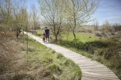 Father and little daughter walking on a path of wooden boards in a wetland. In Padul, Granada, Andalusia, Spain stock photos