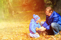 Father and little son collecting leaves in autumn Stock Photos