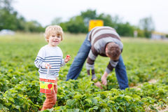 Father and little son on organic strawberry farm Stock Photos