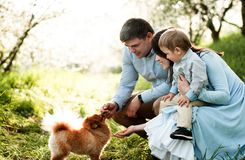 Father, mother, little child playing with dog Spitz. Sitting on the grass in a blooming apple orchard royalty free stock photo
