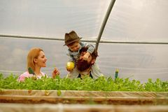 Father mother and son in greenhouse. son with mother and father work in greenhouse. mother father and son in greenhouse stock photography