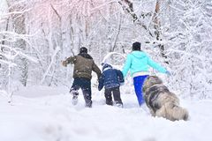 Father, mother, son and their big dog run in a winter snowy forest. Weekend of an active family in nature. Father, mother, son and their big dog run in a winter royalty free stock images