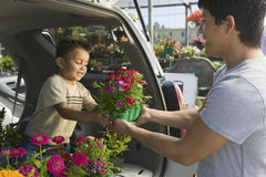Father Passing Flower Pot To Son In Back Of A Minivan royalty free stock photo