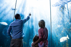 Father pointing a fish while the mother and the daughter looking at fish tank Royalty Free Stock Photos