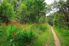 Father pushing his daughter in a stroller down a lush path with Stock Images