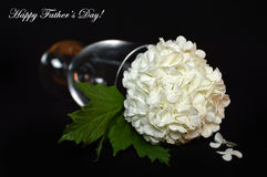 Fathers Day flower Royalty Free Stock Photos