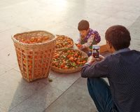 Father shoot on mobile phone camera daughter that helps him sort tangerine from wooden baskets. Stock Images
