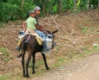 Father and Son. A father and son on a burro heading off to the farm. Farming in this area of the Dominican Republic is a common occupation Royalty Free Stock Photos