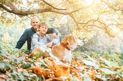 Father, son and beagle dog walk in autumn park, warm indian summer day stock photo