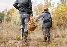 Father and son carry full basket of mushrooms Royalty Free Stock Photos