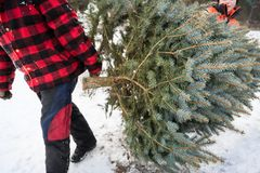 Christmas tree cutting Stock Images