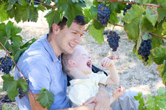 Father and son eating grapes Stock Image