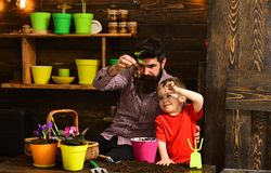 Father and son. Family day. Greenhouse. bearded man and little boy child love nature. happy gardeners with spring. Father and son. Family day. Greenhouse royalty free stock photography