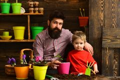 Father and son. Family day. Greenhouse. happy gardeners with spring flowers. Flower care watering. Soil fertilizers. Bearded men and little boy child love royalty free stock photos