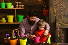 Father and son. Family day. Greenhouse. happy gardeners with spring flowers. Flower care watering. Soil fertilizers. Bearded men and little boy child love stock images