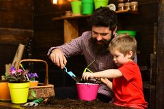 Father and son. Fathers day. Family day. Greenhouse. Flower care watering. Soil fertilizers. gardeners with spring. Flowers. bearded men and little boy love royalty free stock image