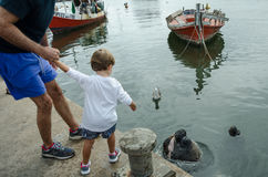Father and son feed fish to a sea lion Royalty Free Stock Images